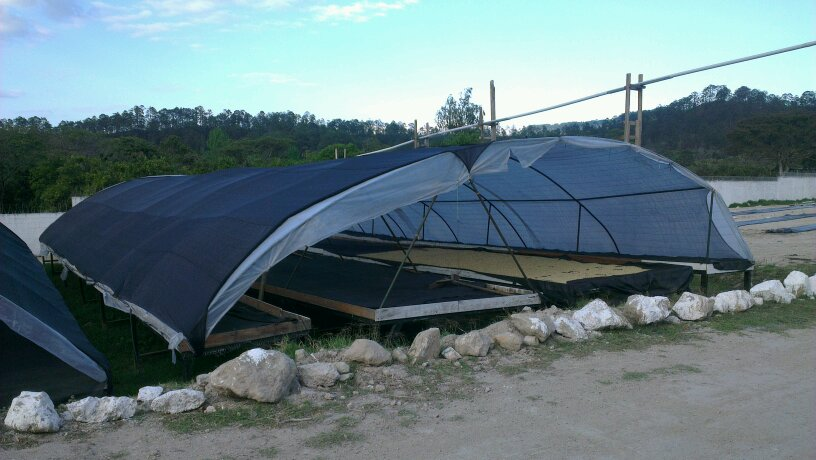 Giant drying beds